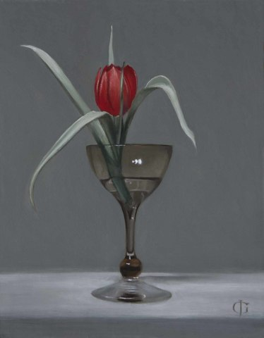 Red Tulip (Tulipa linifolia) in a Small Glass
