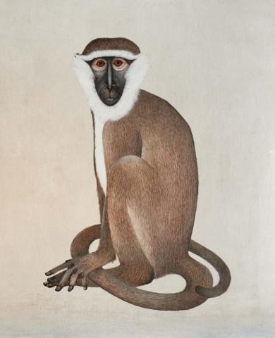 Harriet Bane, Vervet Monkey