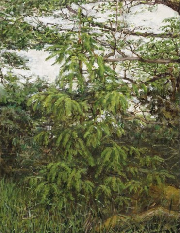 Ben Henriques, A Young Pine Tree