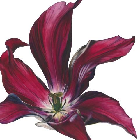 Rosie Sanders, Tulip I