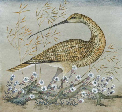 Curlew and Sea Campion