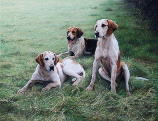 Duke of Beaufort's Foxhounds