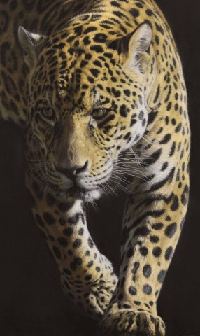 Jaguar - Large as Life V