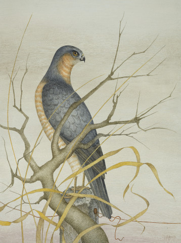 Harriet Bane, Sparrowhawk