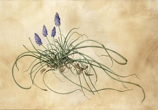 Kate Nessler, Grape Hyacinths