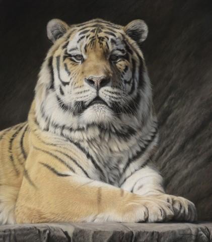 Gary Stinton, Face to Face - Amur Tiger