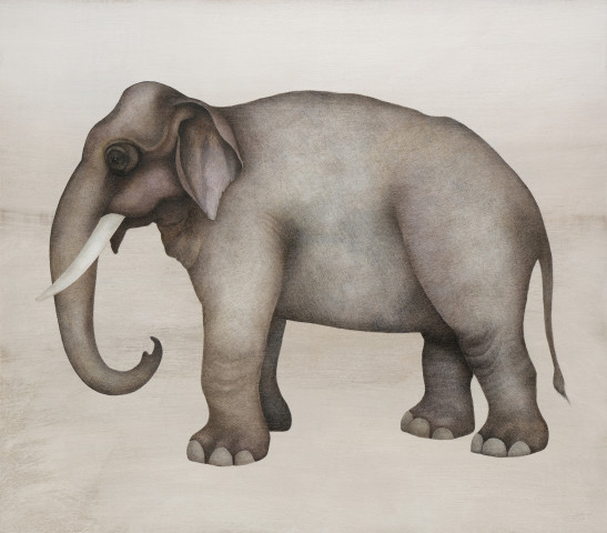 Harriet Bane, Asian Elephant