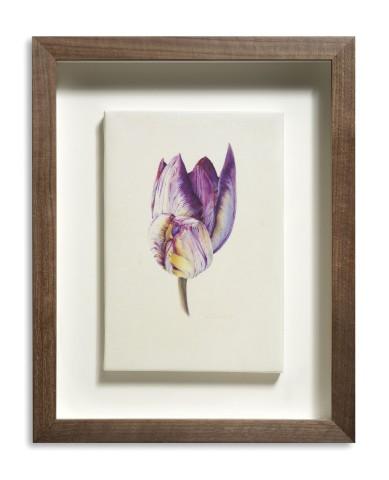 Duet (Tulipa 'Insulinde')