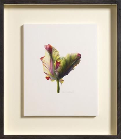 Fiona Strickland, Tulipa 'Flaming Parrot'