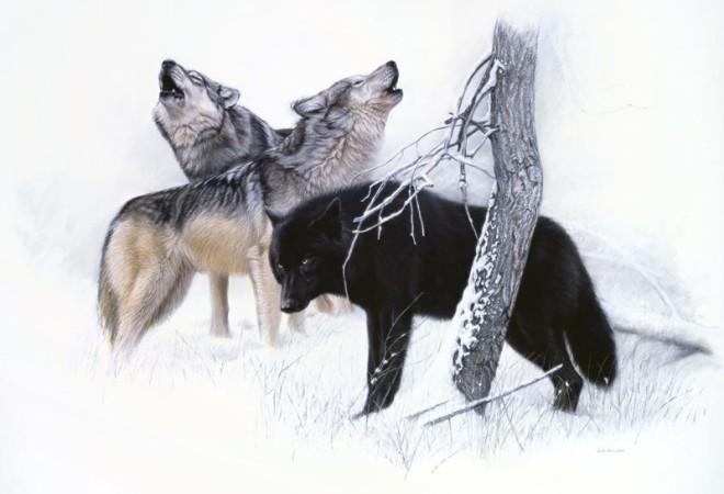 Gary Stinton, Grey Wolves