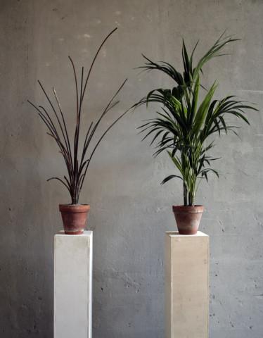 Andrea Francolino, A-Biotic vegetable , 2015