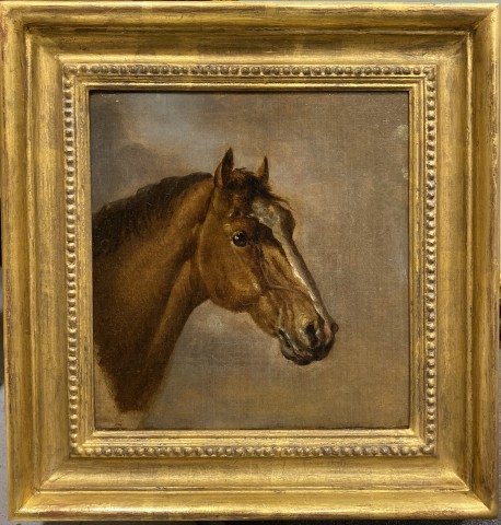 Ben Marshall, Head of a bay thoroughbred