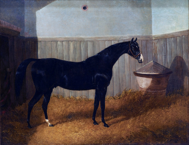 A black thoroughbred in a loose box