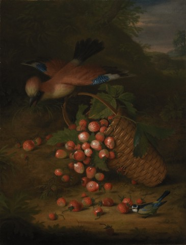 A jay sitting on the handle of a basket of strawberries, with a blue-tit in the fore ground
