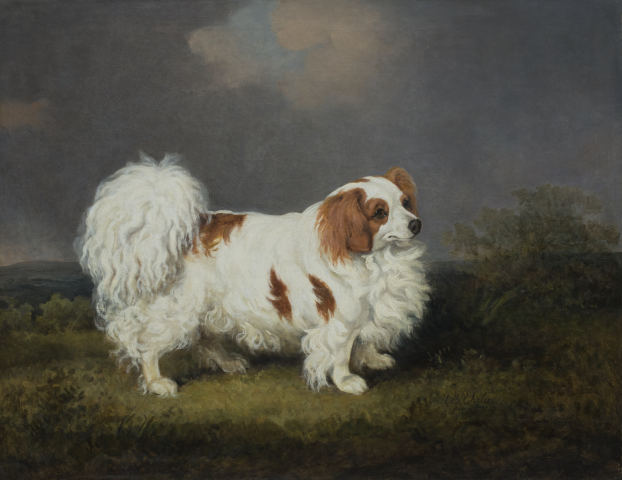 %22Carlo%22 a portrait of a famous spaniel, the property of Mrs Kennedy