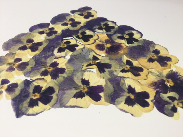 Pansy Wedge