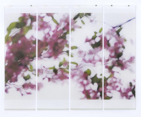 Jeri Eisenberg, Shivering Crabapple, 2016