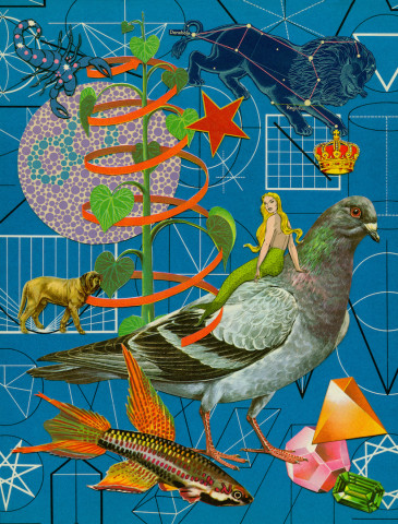 Anne Lemanski, Pigeon - Small
