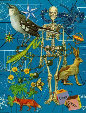 Anne Lemanski, Skeleton - Large