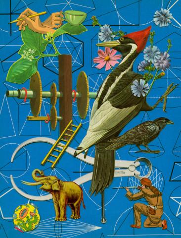 Anne Lemanski, Woodpecker