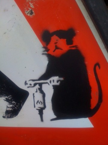 %22Driller rat%22 (not for sale)