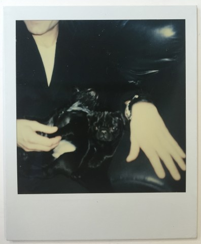 Andy Warhol, Pair of pugs with Stephen Sprouse, 1985