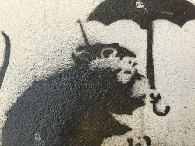 Umbrella Rat