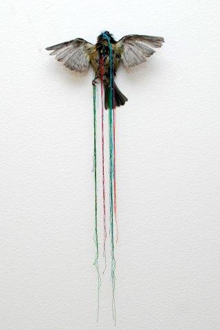Penny Lamb, Untitled (bird), 2006