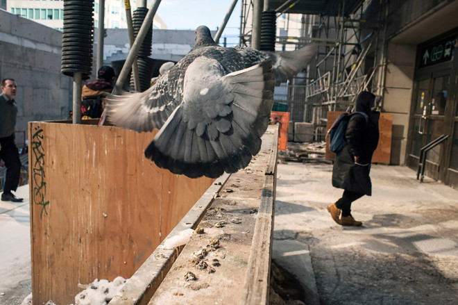Larry Towell, Pigeon, Union Station, Toronto, Canada, February 2015
