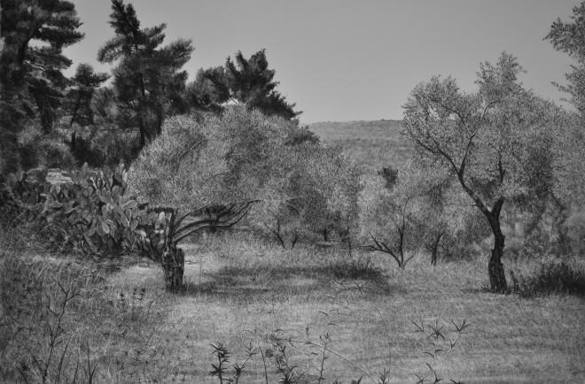 Landscape, Olive Trees