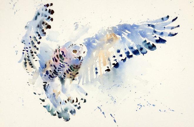 Jake Winkle, SNOWY OWL