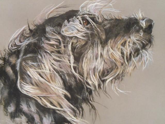 Paula Vize, PORTRAITURE - Dog