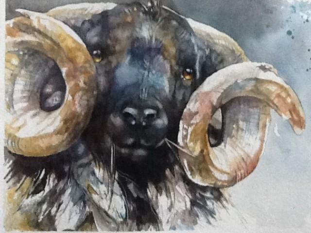 Paula Vize, Irish Ram, 2019