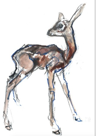 Mark Adlington , Gerenuk Fawn, 2018