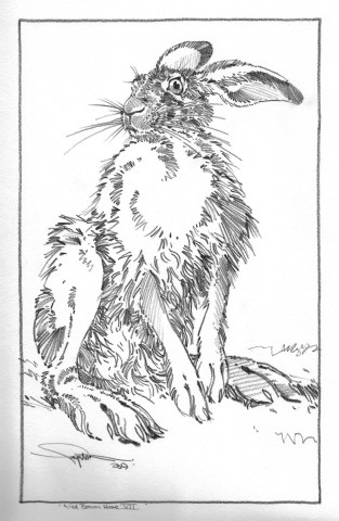 Colin See-Paynton, Wild Brown Hare VII