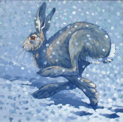 Colin See-Paynton, Snow Hare I