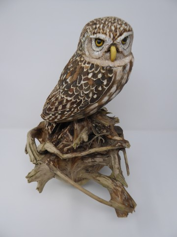 John & Marilyn Davies, Little Owl