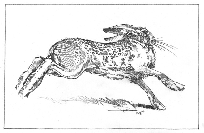 Colin See-Paynton, Running Hare I