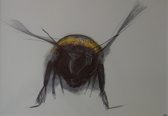 Dewi Tudur, Cacwn / Bee