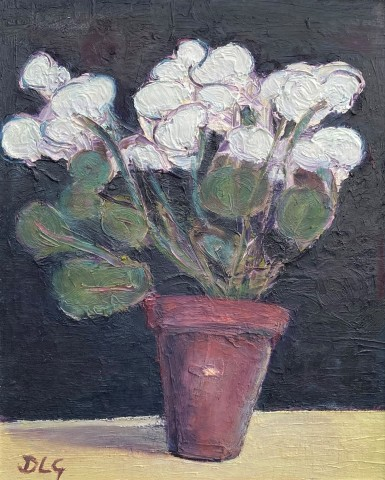 David Lloyd Griffith, White Cyclamen
