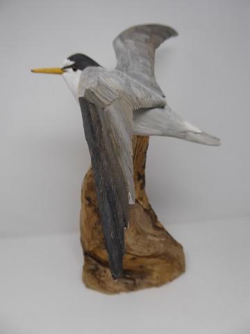 John & Marilyn Davies, Little Tern