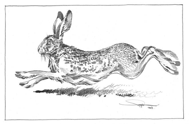 Colin See-Paynton, Running Hare III
