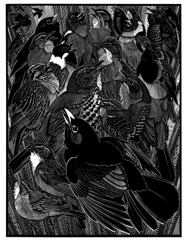 Colin See-Paynton, Jubilation of Songbirds