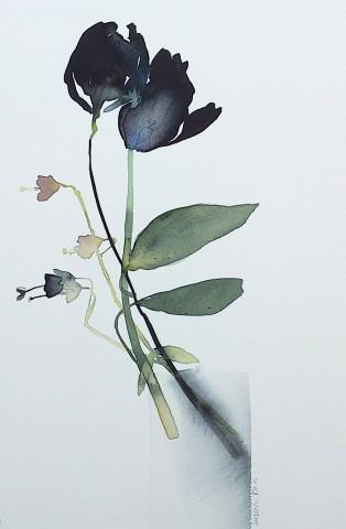 Susan Kane, Black Tulips