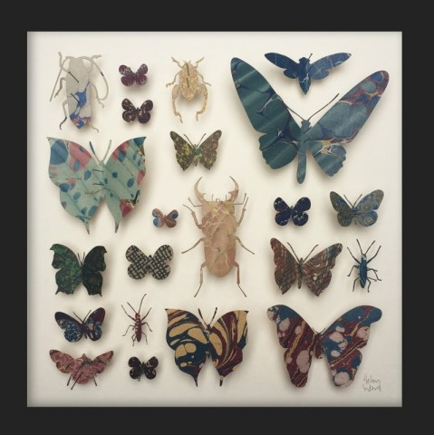 Helen Ward, Entomology II