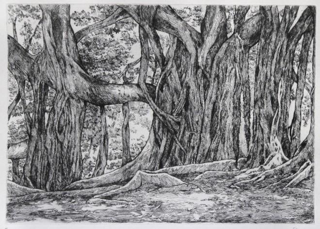 Ficus, Palerme, Sicile