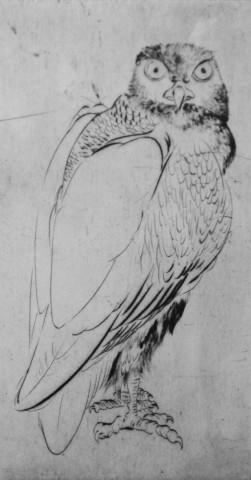 Marjan Seyedin, Oiseau 1, 2011