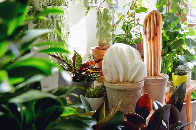 The Cactus House: Ben Russell