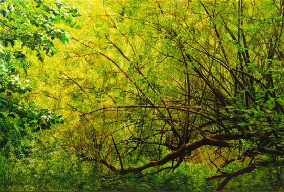 Hampstead Bushes  Fred Schley