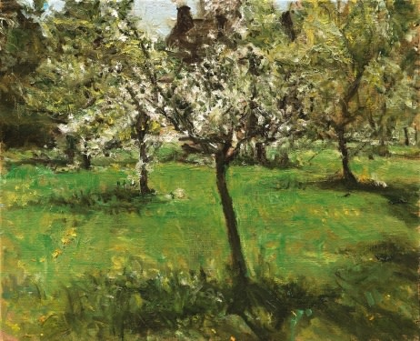 Springtime in a Betuwe orchard